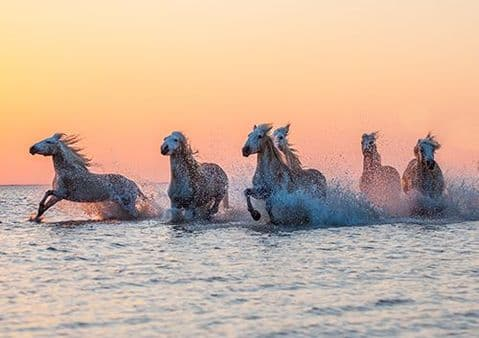 Camargue Sunrise Large Unmounted Wild Horse Print-Orange Glow