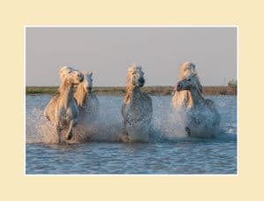 Camargue Sunrise Wild Horse Print - Morning Light