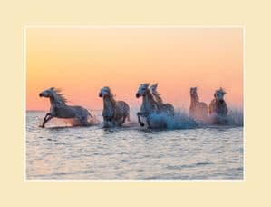 Camargue Sunrise Wild Horse Print - Orange Glow