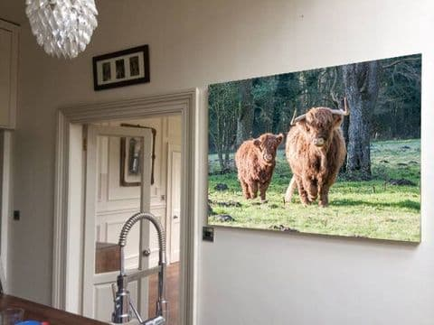 Coming Home Highland Cows Canvas Print
