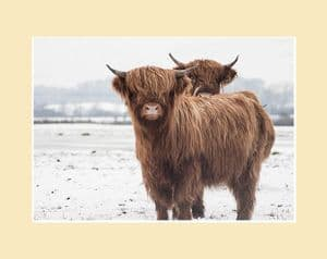 Double Trouble Highland Calves Print