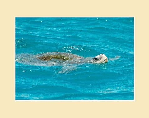 Green Turtle Ocean Wildlife Print
