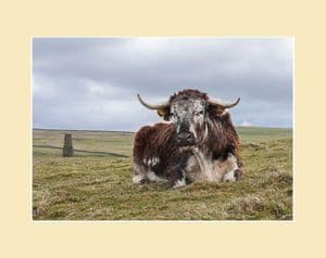Longhorn Cow and Tower Print
