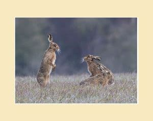 Mad April Hares Brown Hares Boxing Print