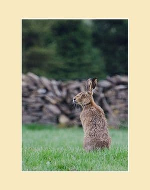Moorland Hare Brown Hare Print