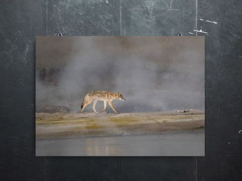 Out of the Steam - Coyote Canvas Print