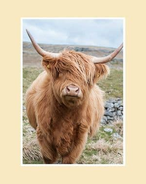 Out on the Hills Highland Cow  Print