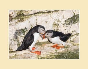 Springtime on the Cliffs Puffin Pair Print
