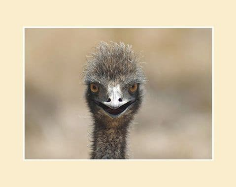 Startled Emu Australian Wildlife Print