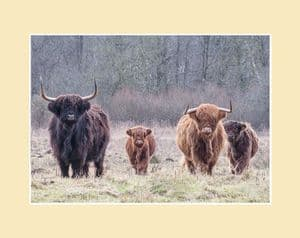 The Herd Highland Cow Print