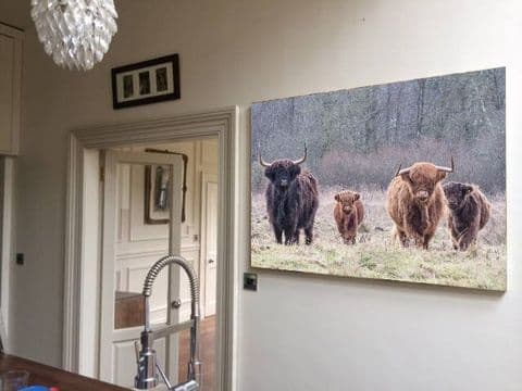 The Herd Highland Cows and Calves Canvas Print