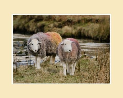 The Multicoloured Herdies Herdwick Sheep Print