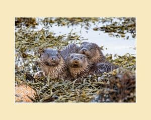 The Otter Family Photoraphic Print