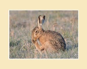 Wash Time Brown Hare Print