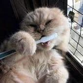 Cat Hygiene Other
