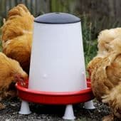 Poultry Feeders and Drinkers