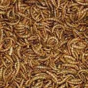 BULK ORDERS of 50 Boxes Dried Mealworms 12.55kg (VAT EXEMPT!!!) FREE POSTAGE IN MAINLAND UK
